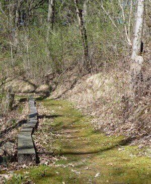 A moss-covered hiking trail