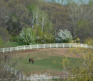 A horse grazes on a Wisconsin farm with budding and blooming trees around it.