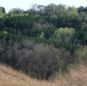 Wooded hillsides