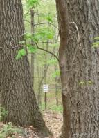 Public land, public trees