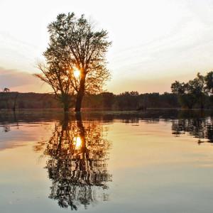 sun-tree1